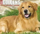 Just Goldens 2019 Calendar